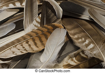 A collection of feathers