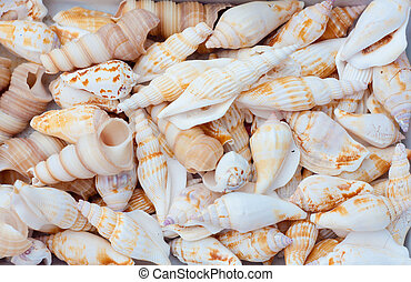 A collection of nice seashells for backgrounds