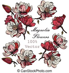 A collection of vector hand drawn magnolia flowers in engraved detailed style.eps
