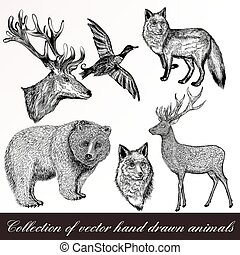 A collection or set of hand drawn vintage styled engraved animals for design
