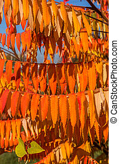 A colorful background image of autumn, fallen autumn leaves ideal for seasonal use as a background for a calendar, postcard. Autumn view with bright yellow and red leaves on a sunny day