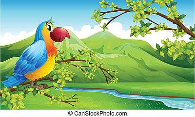 A colorful bird near the mountain