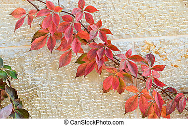 A colorful branch on wall