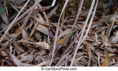 A colorful lizard in the middle of the woods - A close up...