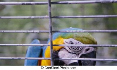 A colorful parrot is sitting in a cage. - A colorful parrot...