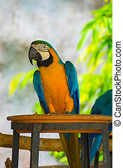 A colorful parrot on branch at zoo