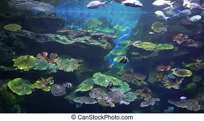 A colourful underwater world with the coral reef and tropical fishes