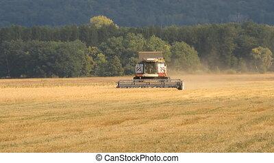 A combine harvester harvesting oats
