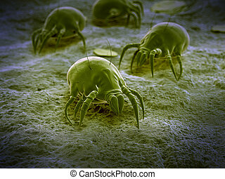 A common dust mite - scientific illustration of a common...