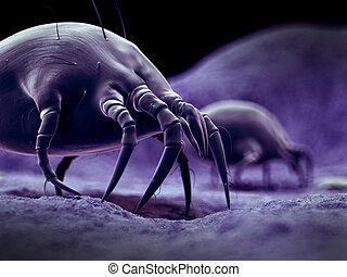 A common dust mite - scientific illustration of a common...