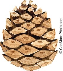 A cone from the forest, on a white background.