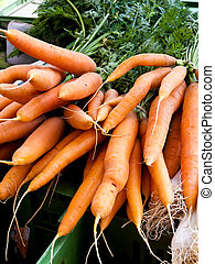 A Confederation of fresh carrots - carrots