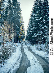 coniferous forest road in winter