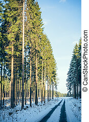 coniferous forest road in winter IV