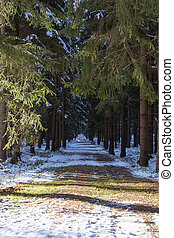 coniferous forest road in winter - A coniferous forest road...