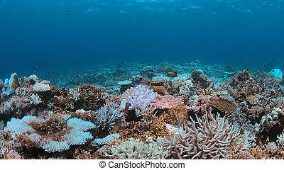 A coral reef dies