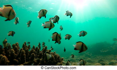A coral reef with plenty of tropical fish.