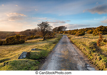 A Cornish Country Lane