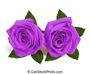 A couple gift roses on valentine day isolated on white background