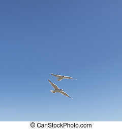 A couple of seagulls flying together in the sky