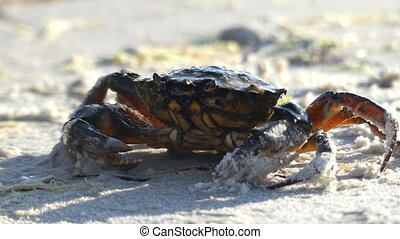A crab is under the flow of water on the Black Sea beach