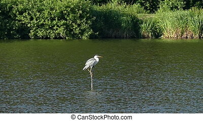 A crane sits on a branch sticking out of river water in some forest