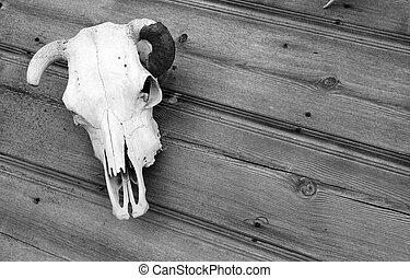 a, cranio