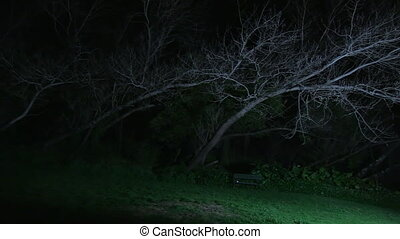 A creepy bench under a leafless tree - A wide pan to left...