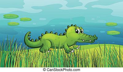 A crocodile beside the pond