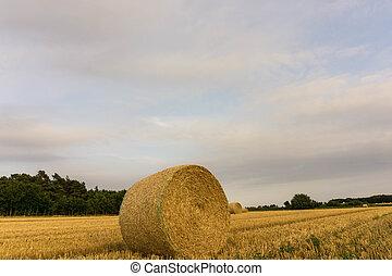 A crop field after harvest in sunshine