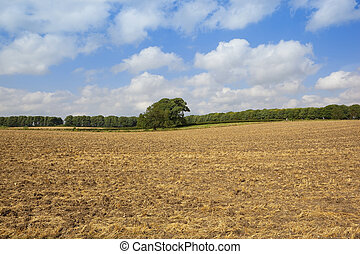 cultivated stubble field