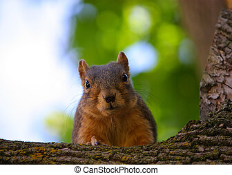 A Curious Squirrel