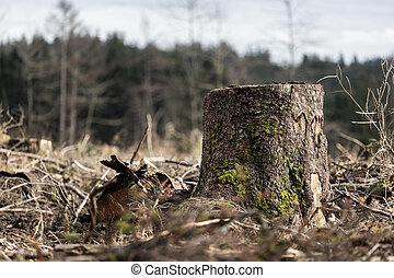 a cut down winter forest