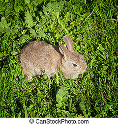 A cute bunny rabbit sitting quietly in the grass