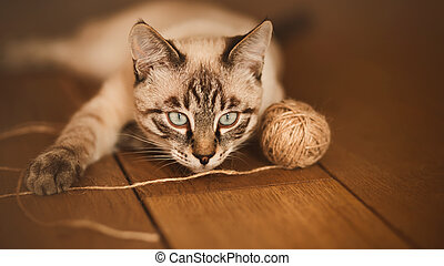 A cute domestic tabby Thai kitten is lying at home on the wooden floor and playing with a ball of wool rope.