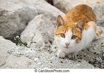 a cute ginger cat