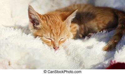 Cute little ginger kitten falls asleep on a fluffy white blanket in the morning sunlight. Hygge and cozy morning concept