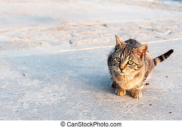 A cute little tabby cat sitting on the ground