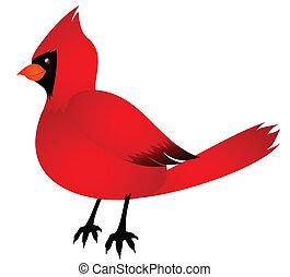 Cardinal - A cute red Cardinal bird.