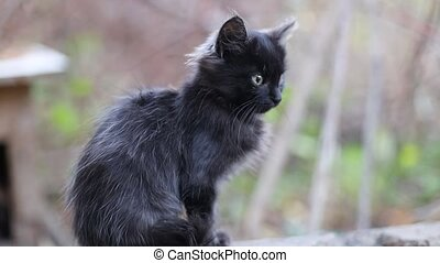 Cute scared black kitten with green eyes sits on a stone on the street, looks around