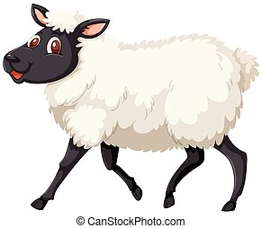 A cute sheep on white background