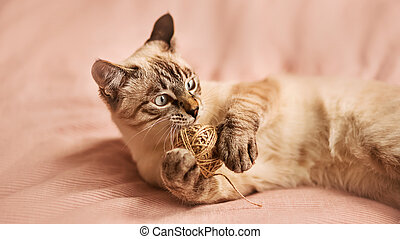 A cute Thai tabby kitten is lying on the bed on a soft pink blanket and playing with a ball of hemp rope, holding it in its paws. A pet and toys.