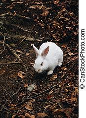 A cute white rabbit walking in the field