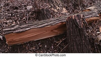 A Damaged trunk of tree - The damaged trunk of the tree...