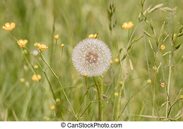 A dandelion in the middle of a meadow