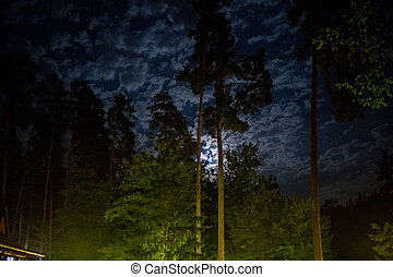 dark night sky in pine forest