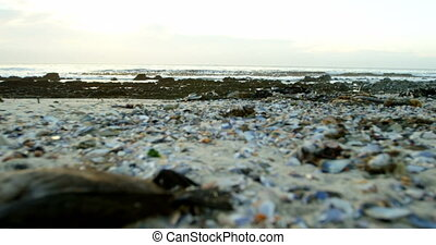 A dead bird in the beach 4k - Close-up of a dead bird in the...