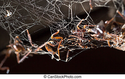 a dead cockroach in the web