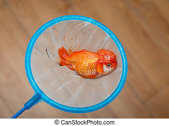 a dead gold fish on a netting