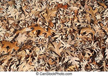 Dead oak leaves background
